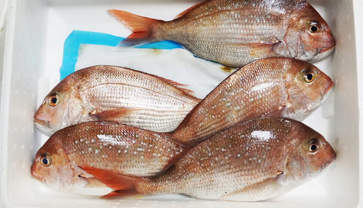 Seafood pads for shelf life extension